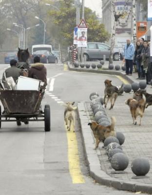 359-бездомни кучета са били заловени само за периода от 1 до 18 май в София